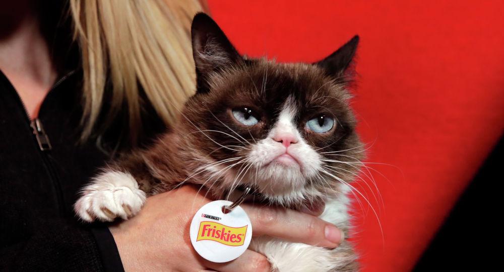Самая сердитая кошка в мире - Grumpy Cat