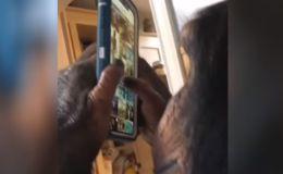 Шимпанзе освоил Instagram