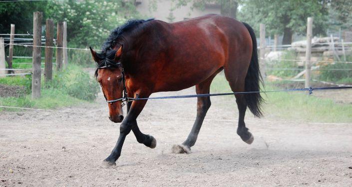 Конь, иллюстративное фото