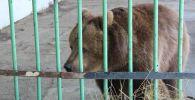 Медведица Катя