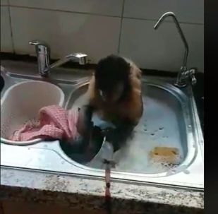 Обезьянка моет посуду - видео