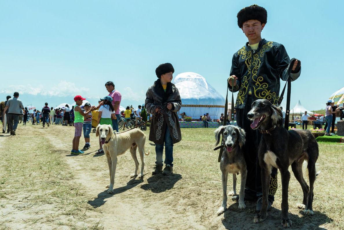 Знаменитая казахская гончая тазы на территории этнофестиваля Ұлы дала – көшпенділер әлемі