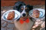 Собака балансирует с подносом еды - видео