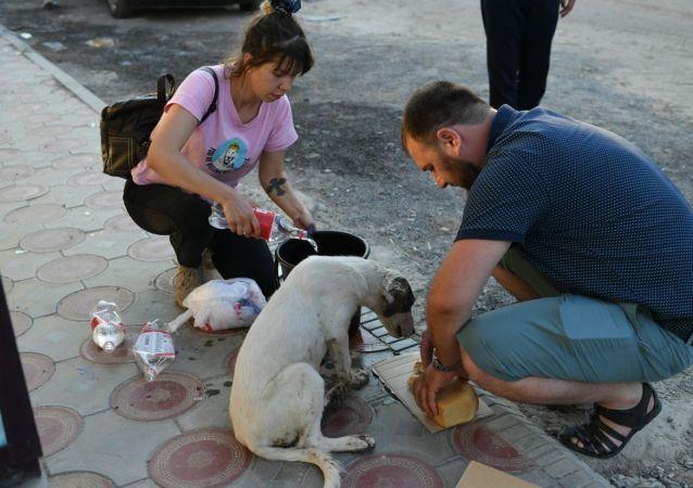 Волонтеры, занимающиеся защитой животных