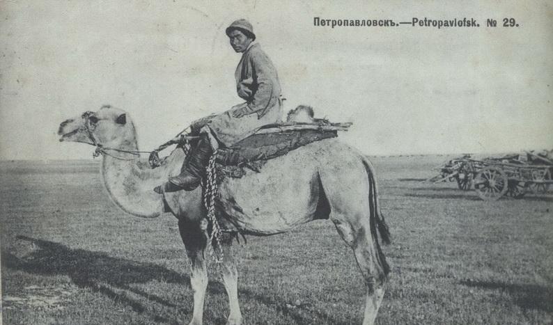 Двугорбый верблюд, архивное фото