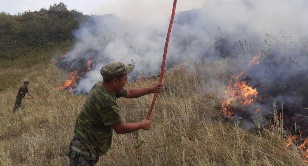 Степной пожар в Алматинской области
