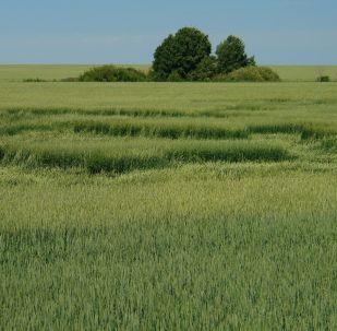 Необъяснимое явление – загадочные круги на полях. Вид с дороги