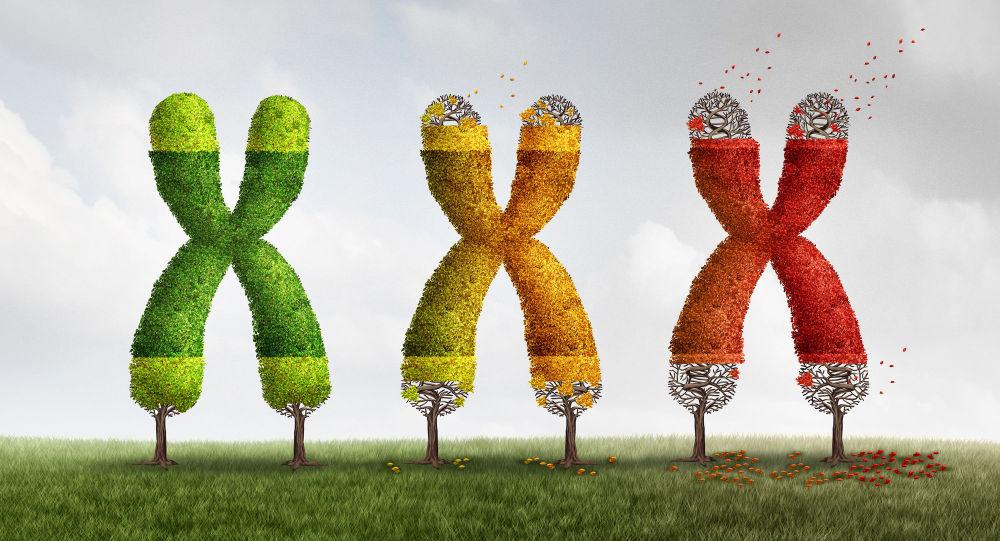 3-D иллюстация с изображением хромосомов, чьи теломеры постепенно укорачиваются