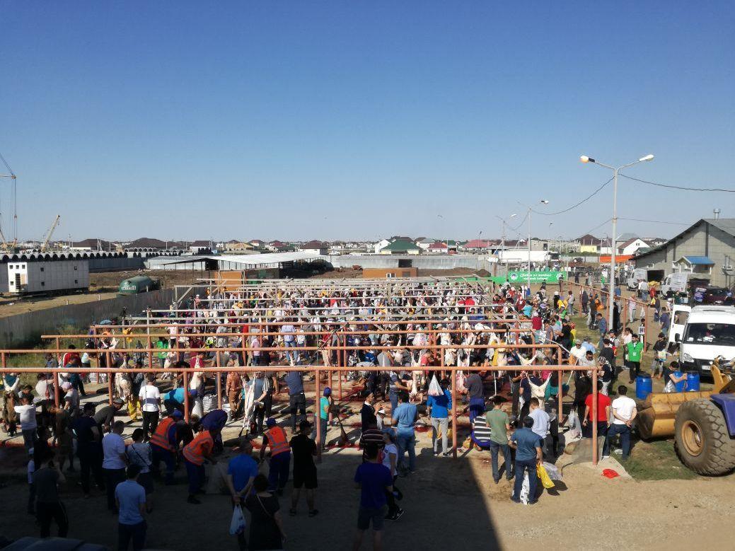 Елордадағы Алтын таға мал базары