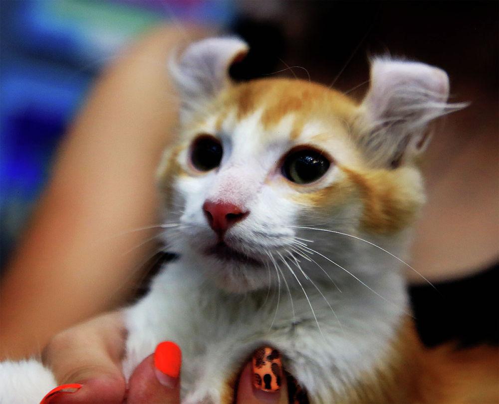 Выставка кошек редких пород