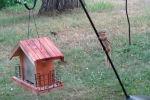 Бурундук пытается залезть в птичью кормушку - видео