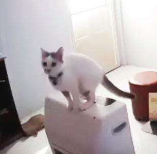 Кошка разбила стеклянный стол - видео