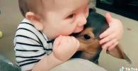 Малыш играет с собакой - видео