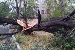 В Петропавловске устраняют последствия урагана