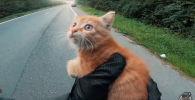 Байкер затормозил на полном ходу, чтобы спасти котенка - трогательное видео