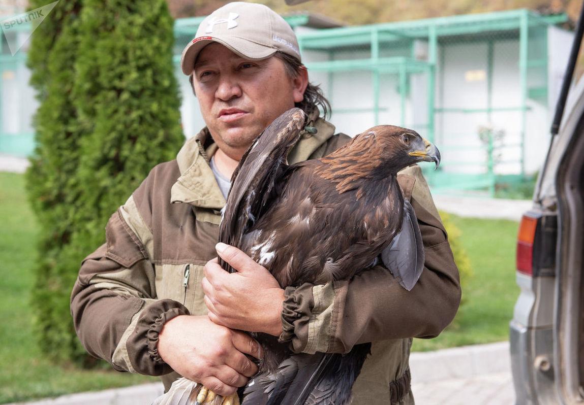 Орнитолог соколиного центра Сункар, курирующий программу по выпуску беркутов, Сергей Шмыгалев