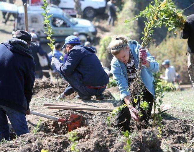 Волонтеры высадили яблони на склоне Кок-Тобе