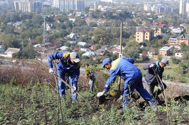 Экологическая акция Jasyl Almaty