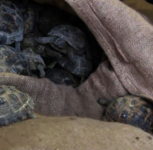 Полиция спасла четыре тысячи черепах