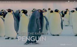 Пингвин-мутант - видео