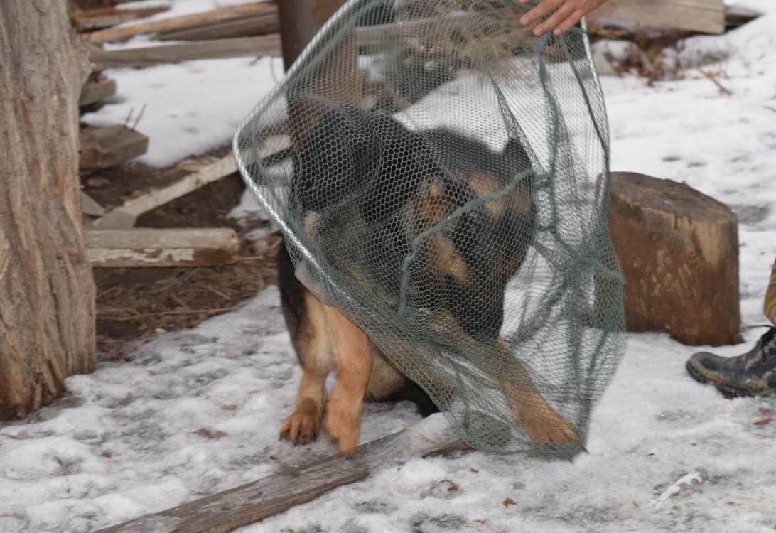 В Атырау запустят проект по стерилизации бродячих собак