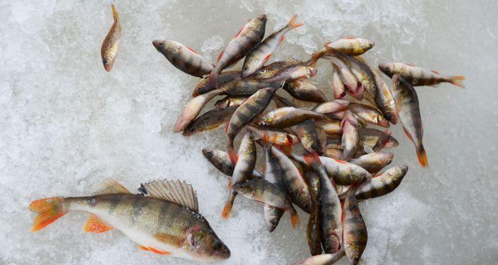 Рыба на льду, архивное фото