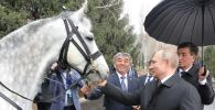 Президенту РФ Владимиру Путину подарили коня в Кыргызстане