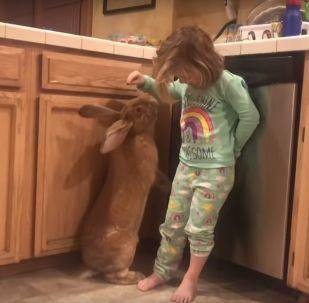 Маленькая девочка и гигантский кролик - лучшие друзья