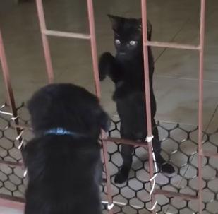 Котенок помог щенку выбраться из клетки