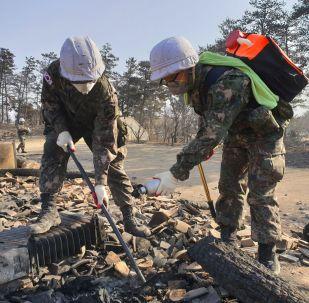 Правительство Южной Кореи объявило о бедствии национального масштаба в связи с пожарами