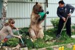 СПУТНИК_Невероятная жизнь медведя Степы