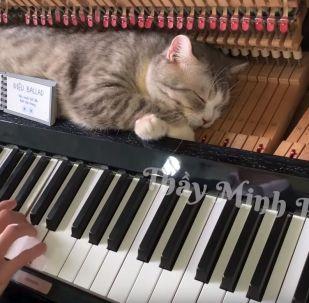 Кот кайфует под музыку