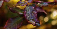 Дождь сад