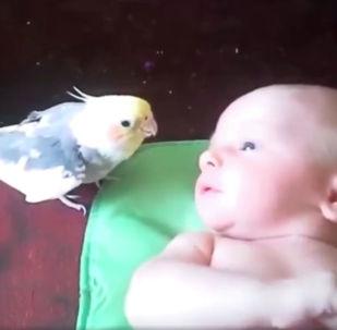 Попугай поет малышу - видео
