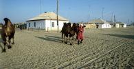 Арал теңізінің маңындағы Ақкеспе ауылы