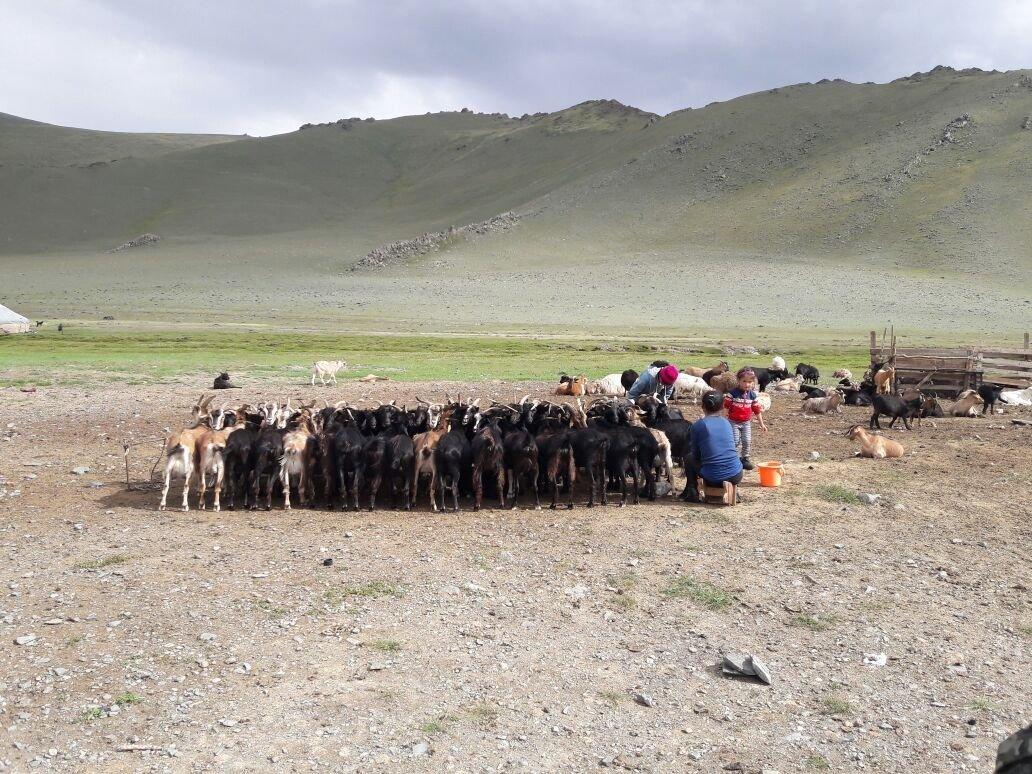 Быт казахской семьи в Монголии