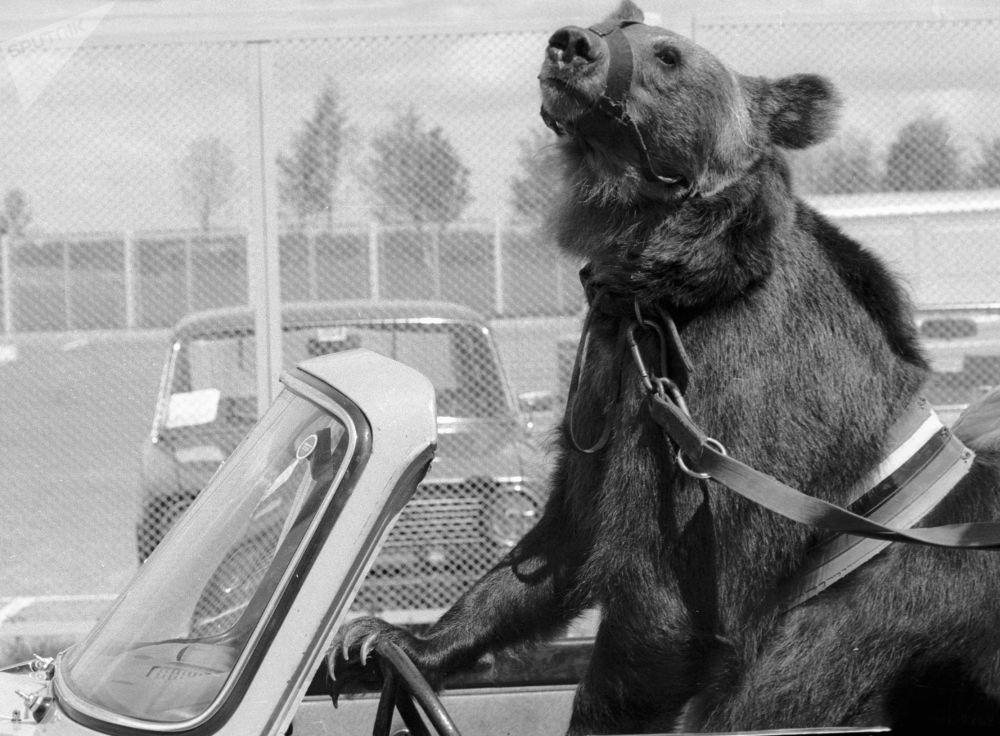 Крылатское стадионына Гоша деп аталатын аю велоспорт бойынша олимпиада жарыстарының ашылу рәсіміне қатысты.