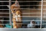 Котята, привезенные из отлова города Талдыкорган
