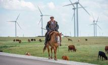 Пастух на лошади, архивное фото