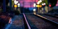 Кошка у рельсов железнодорожного полотна вечером
