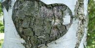 Сердце на дереве
