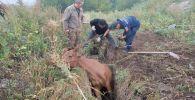 Спасение лошади в Восточном Казахстане