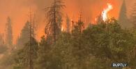 Лесные пожары в Калифорнии: дым заслонил солнце  - виде