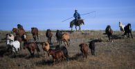 Пастух с табуном лошадей
