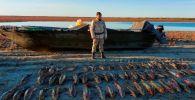 Браконьеры выловили десятки осетровых рыб