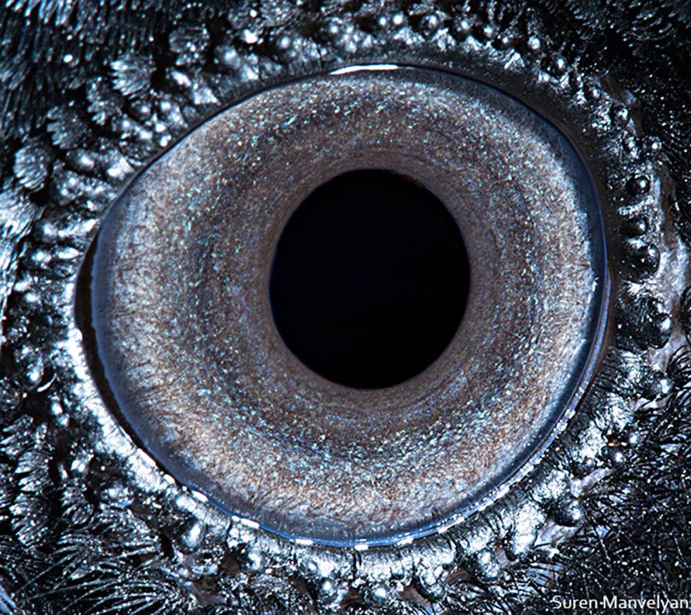 Жұмбақ тұңғиық: қарғаның көзі