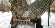 Instagram недели: старый тополь в Нур-Султане