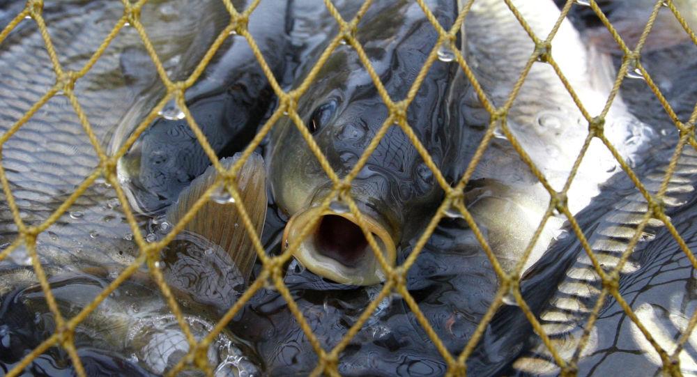 Отлов рыбы