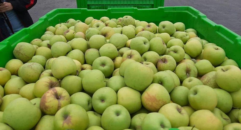 Яблоки, урожай, иллюстративное фото
