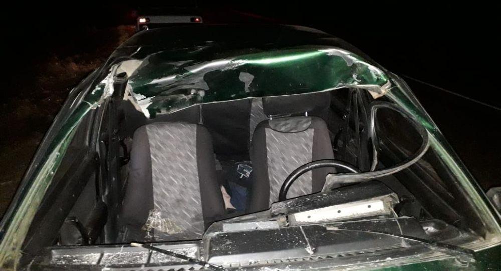 Водитель госпитализирован после столкновения с лошадью в Северном Казахстане